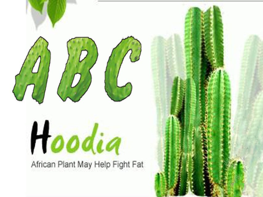 SUPPRESS APPETITE CACTUS HOODIA GORDONII EXTRACTS 20:1 DIETARY SUPPLEMENTS Belly Fat Burner