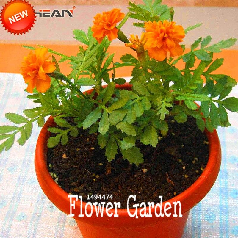 gran venta! 11 tipos de culantrillo jardín de hierbas caléndula