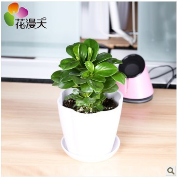 small office plant. Small Office Plant. Desk Flowers Potted Plants Bonsai Radiation-in From Home Plant N