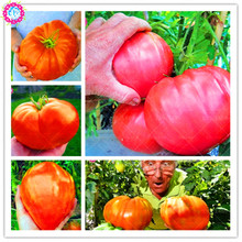 Buy giant tomatos and get free shipping on AliExpress com