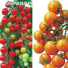 Organic Tomato Seeds Rare Cherry Tomato Seed Fruit * Vegetable Seeds No-gmo And Delicious Bonsai Plants For Home & Garden 20pcs