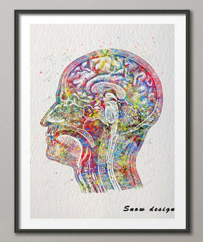 Original Watercolor Human Head poster print Pictures Canvas painting Anatomy medical wall art Home Decor Wall hanging Giclee art