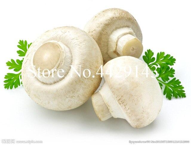2018 Nuovo Piante Carnose 100 pz piante Funghi di Alta-nutrizione Commestibile V