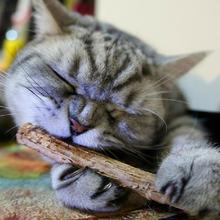 10/15/20 Pcs Cat Teeth Sticks Brushing Pure natural catnip pet cat molar Toothpaste Stick fruit Matatabi snacks sticks