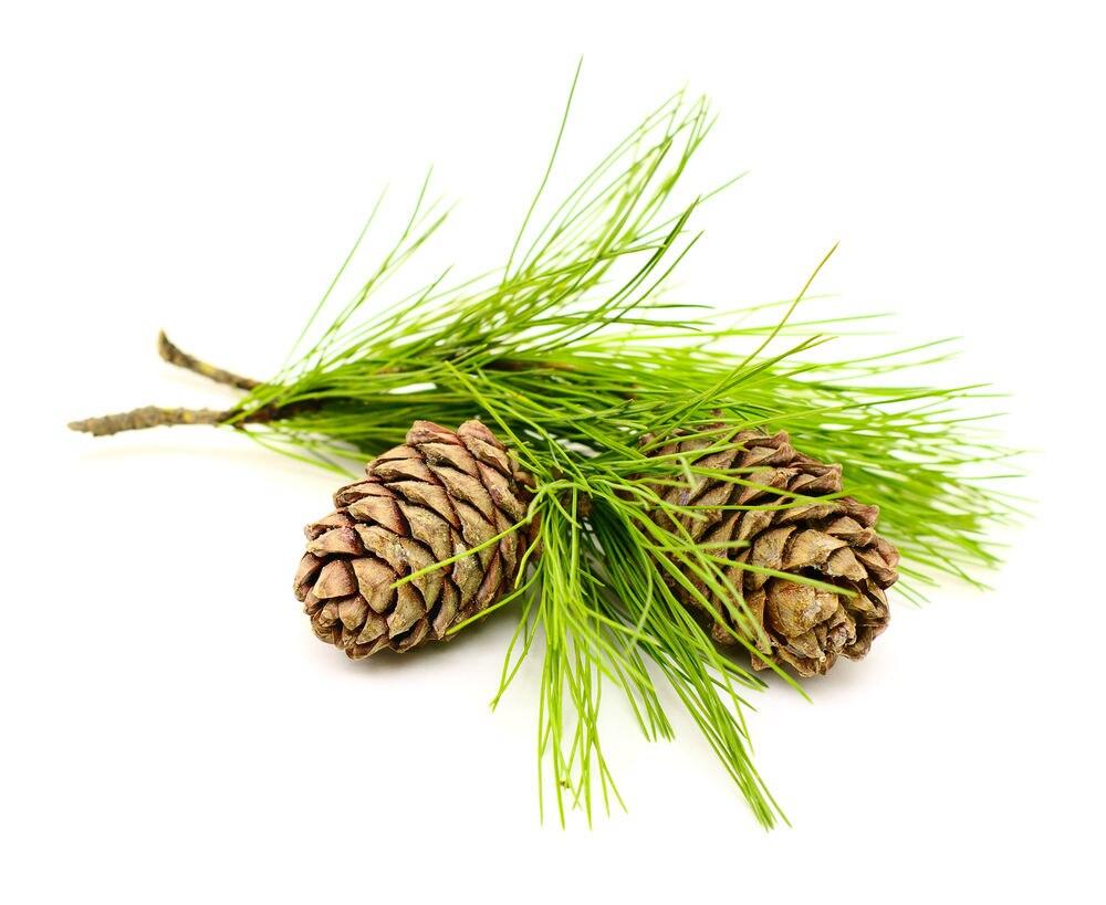 Sedir Ağacı YağıFaydaları ve Kullanım Alanları