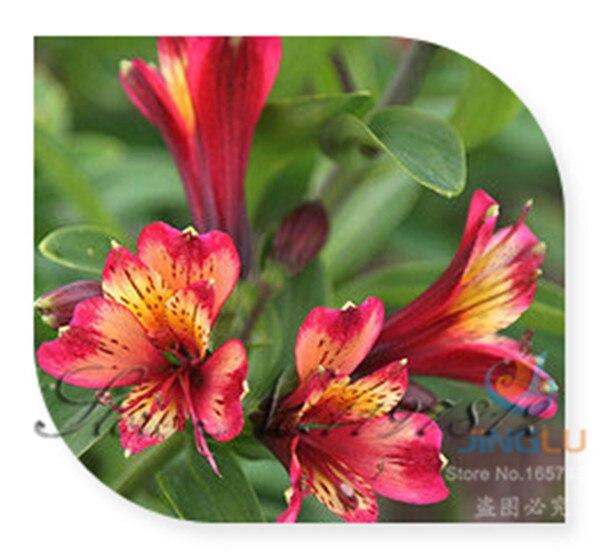 Ordinary Long Lasting Cut Flowers Part - 4: Ordinary Long Lasting
