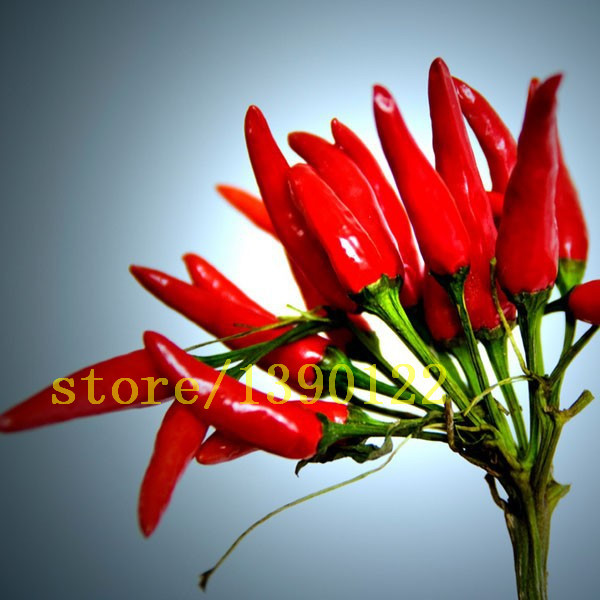 Red hot chili peppers fruit and vegetable seeds for flower