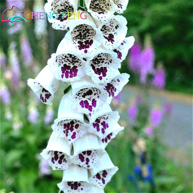 Digitale De Fleurs plantes 100 plantes Pour Jardin Plantation Plants ...