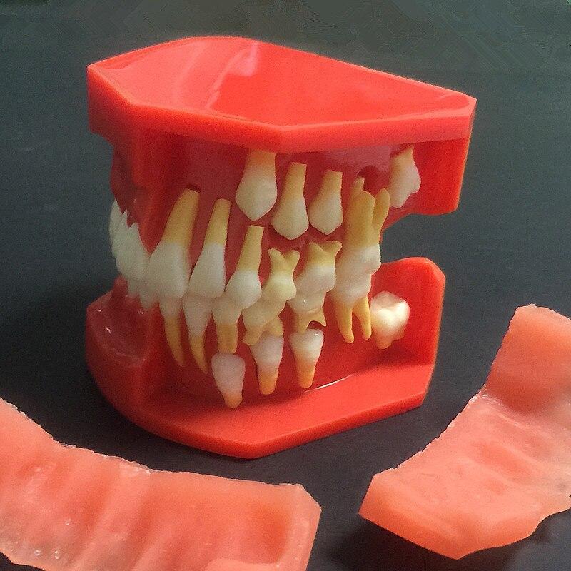 2018 bonne qualité nouveauté dentaire dents anatomie anatomique modèle enfants modèle dentaire
