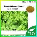 Sweet Wormwood Extrato/Artemisia annua L. com extrato Artemisinina Pó made in China 500g