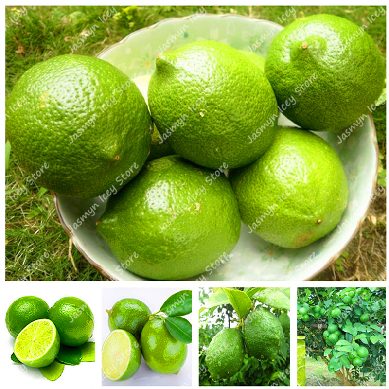 30 Pcs Green Lemon Tree Bonsai Fruit Plants Outdoor Orchard Farm Potted Bonsai Fruit Lime Tree Planting For Home Garden Buy At The Price Of 0 14 In Aliexpress Com Imall Com