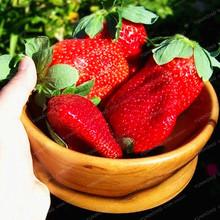 500 Pcs/Bag Giant Strawberry Bonsai Rare Big As A Peach Fragaria Ananassa L. Maximus Strawberry Fruit Bonsai For Home Garden