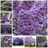 1000 pcs/ bag Bonsai Paulownia Outdoor Royal Empress Flore Tree Plants Home Garden Potted Plants