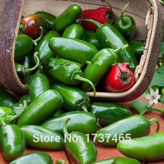 200 шт Jalapeno перец чили быстро растущие овощные Бонсай завод для Домашнего Цветоводства Бесплатная доставка