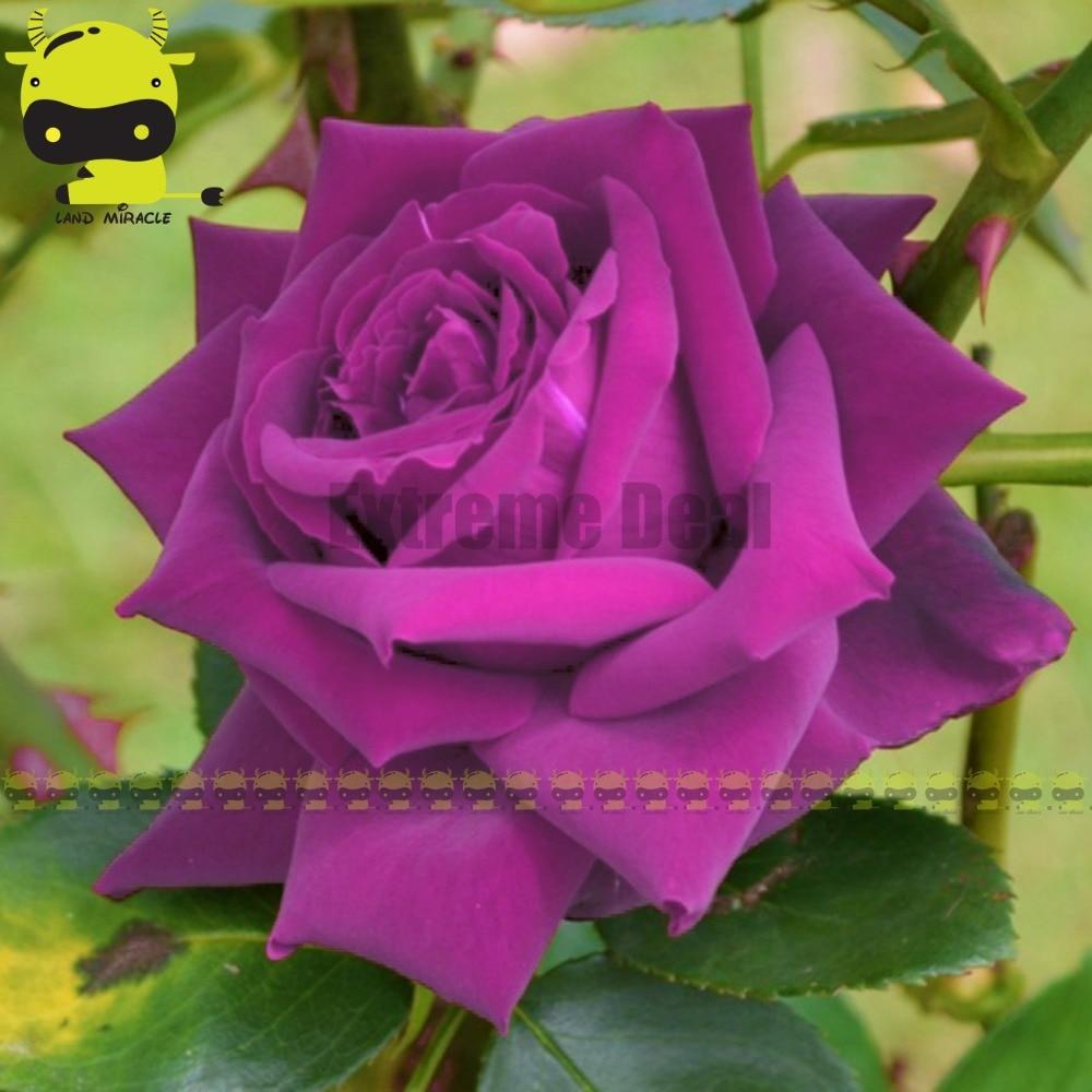 popular purple tree decorations-buy cheap purple tree decorations