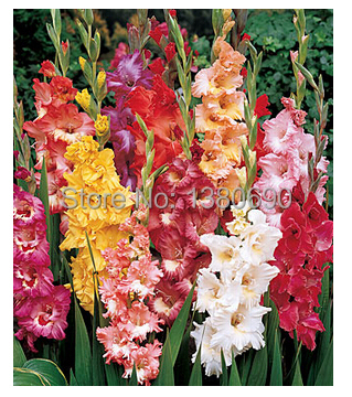 online buy wholesale tall flowering plants from china tall