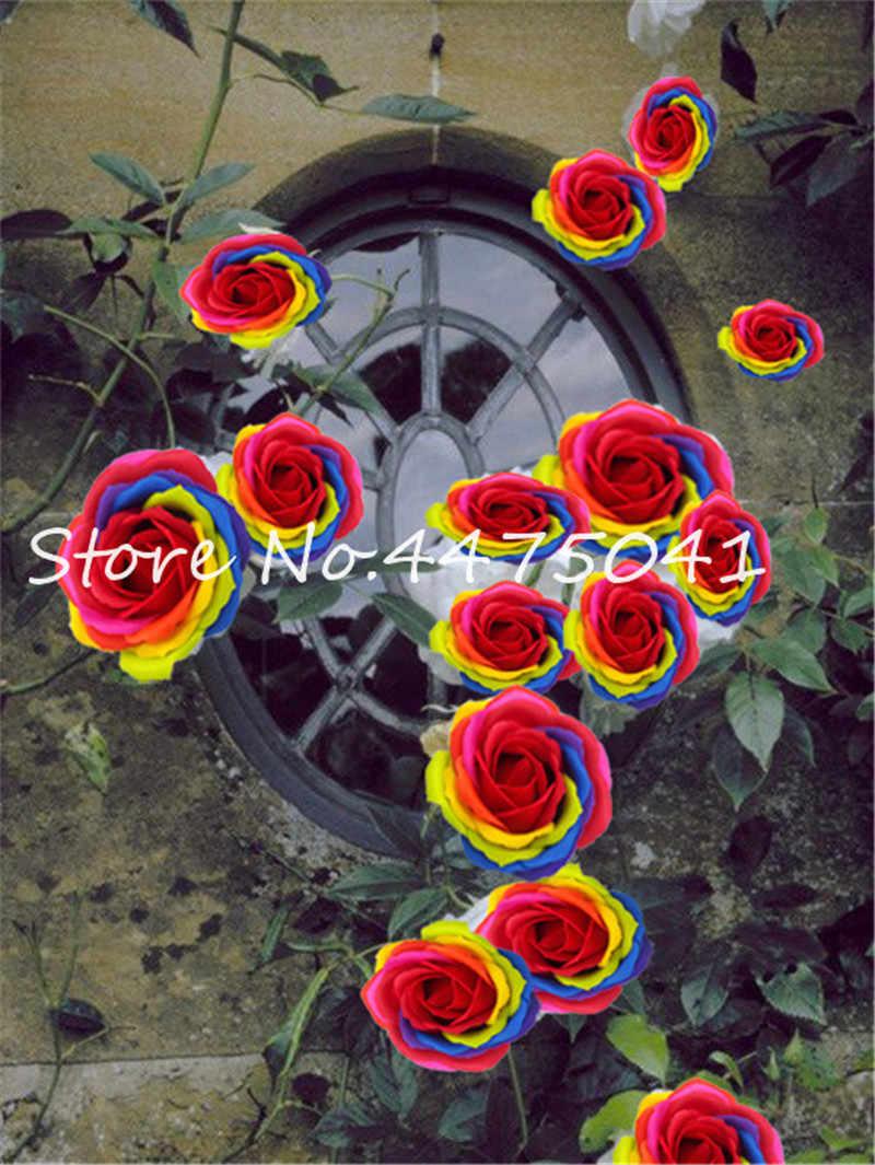 100 ピース屋外クライミングレインボーローズ Bonsais ダブル花びら多年生の花 Diy 盆栽ポット家の庭の装飾花