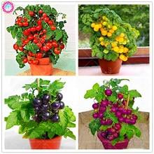 200 pçs / saco sementes de tomate bonsai, delicioso tomate cereja sementes, não-GMO sementes vegetais alimentos Comestíveis varanda vasos de plantas de jardim