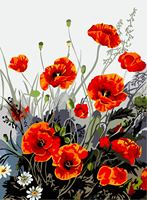 Digital DIY Oil Painting Red Poppies Frameless Picture On Canvas Home Decoration Wall Handmade Painting By