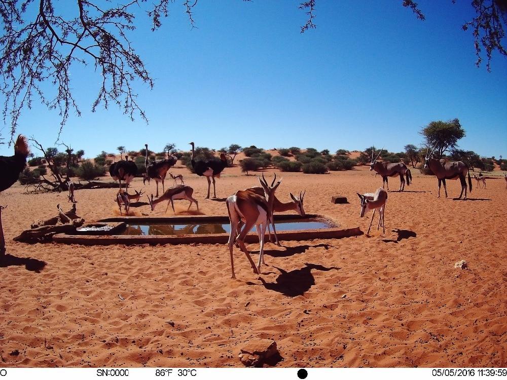4G_GPS_hunting trail cameras (18)