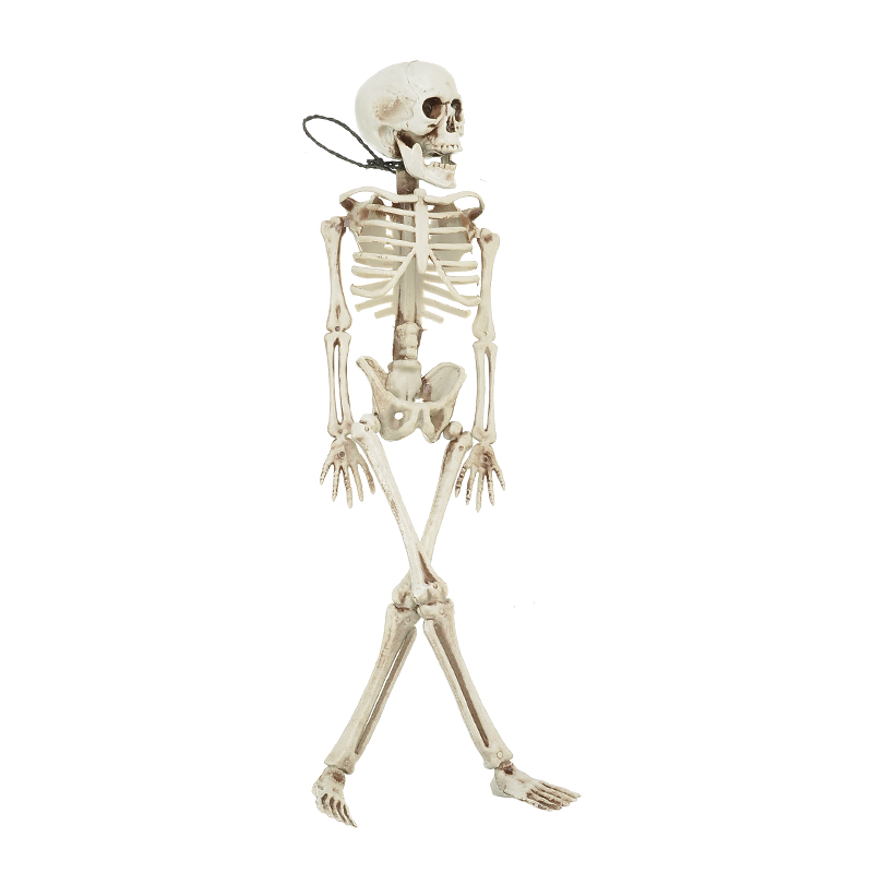 40CM Human Anatomical Anatomy Bone Skeleton Model Flexible Medical Medical Learn Aid Anatomy Art Sketch Wholesale