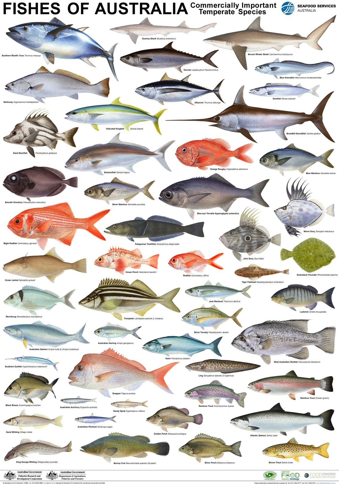 Hd Image Of Nsw R Fish Species Chart Size