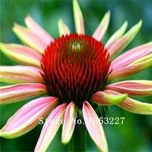 100 Prairie многолетние травы Эхинацеи семена цветов происхождения в Северной Америке оригинальная упаковка семена цветов бесплатная доставка