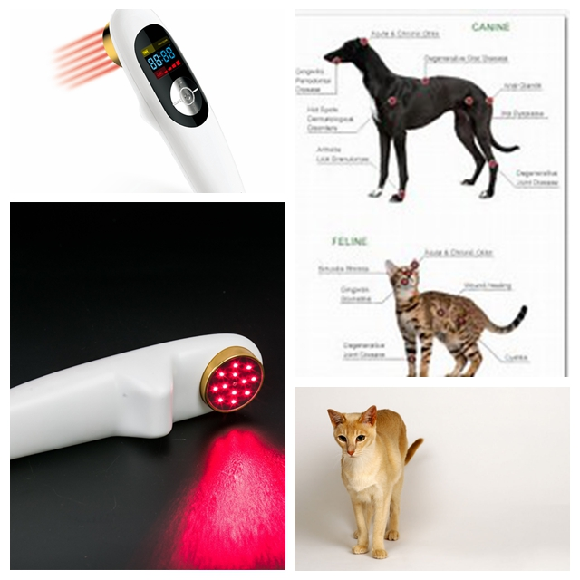 Small size arthritis therapy pet laser therapy device for home use small size sprain therapy light therapy for pain management home remedy