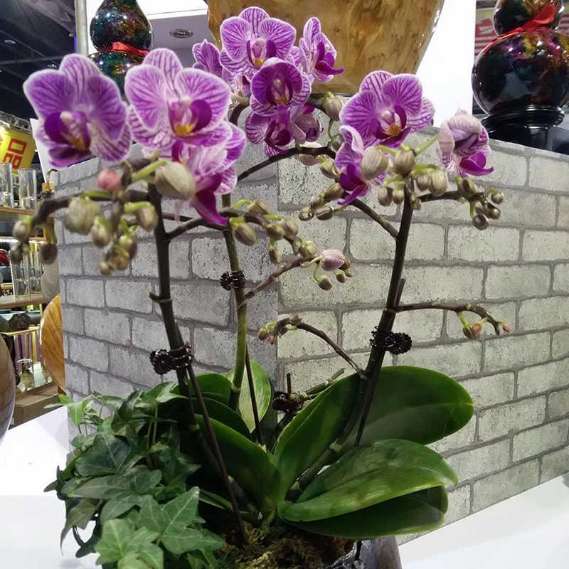 20 Pcs Kunststoff Pflanze Fix Clips Orchidee Stamm Reben Unterstützung Gemüse Bauernhof Blumen Obst Gebunden Bündel Zweig Spann Gartenarbeit Werkzeug