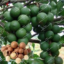 Buy  eeds Tropical fruit seeds for Home Garden   online