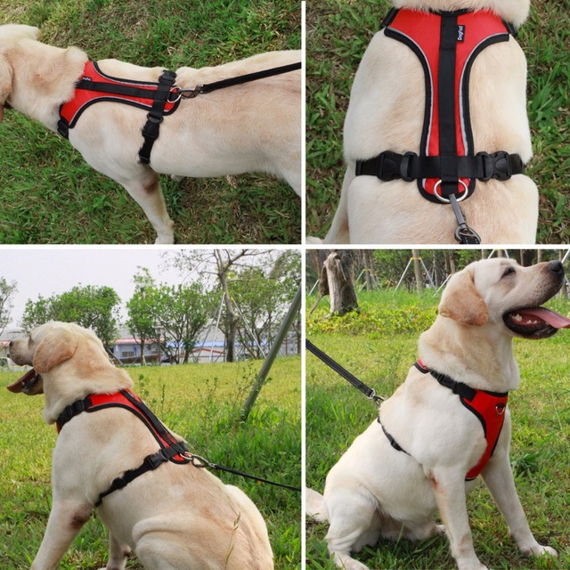 Reflective No Pull Harness