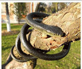 Halloween Fool Day Trick Extended Simulation Snake Model 133cm Fake Snake Toy Furnishing Articles Received gadgets funny toys