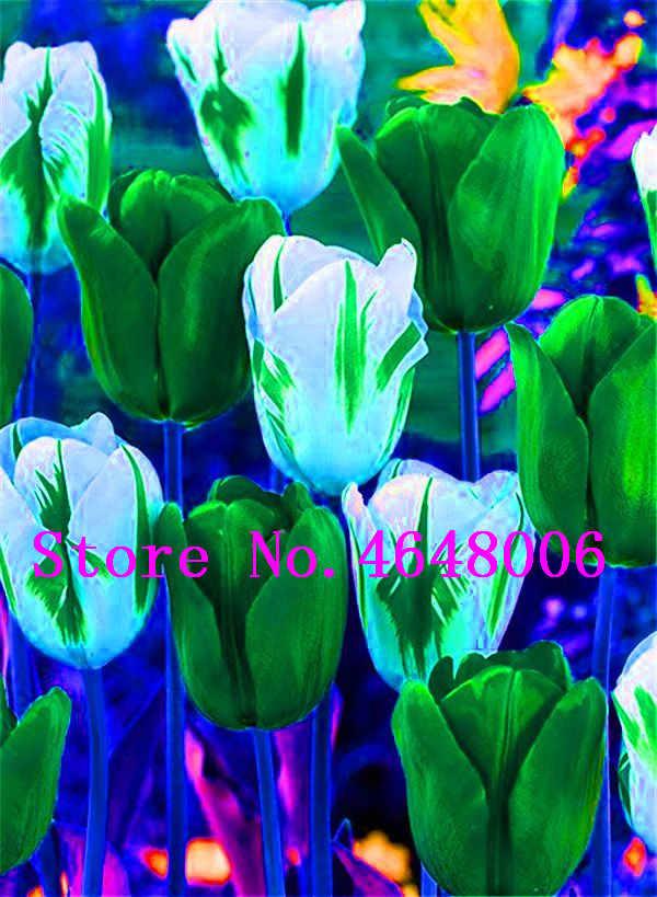 Commercio all'ingrosso di Alta Qualità 50 pz/lotto Tulipano Bonsai Fiori di Nozze A Casa Decorazione Fiori Decorazione Della Casa di Charme Perenne Tulipanes