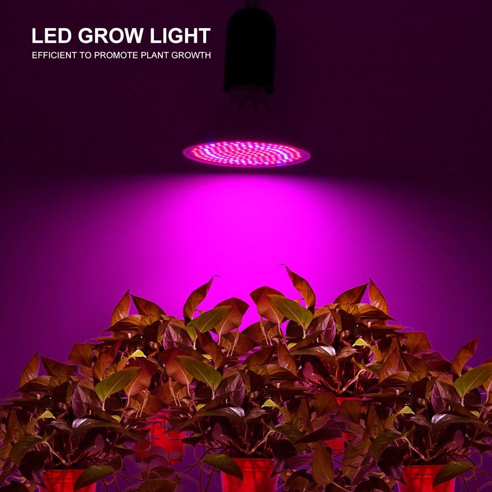 Full Spectrum LED Plant Grow Lights 60LED 126LED 200LED 352LED 500LED Red Blue Grow Light For Flowering And Hydroponics Plants