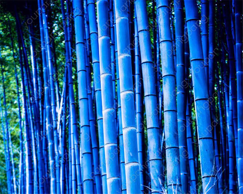 تعزيز 2019! الصينية النادرة الأزرق الخيزران بونساي ، مثالية الزينة DIY بها بنفسك حديقة المنزل النبات ، يطلق النار الخيزران الصالحة للأكل 50 قطعة