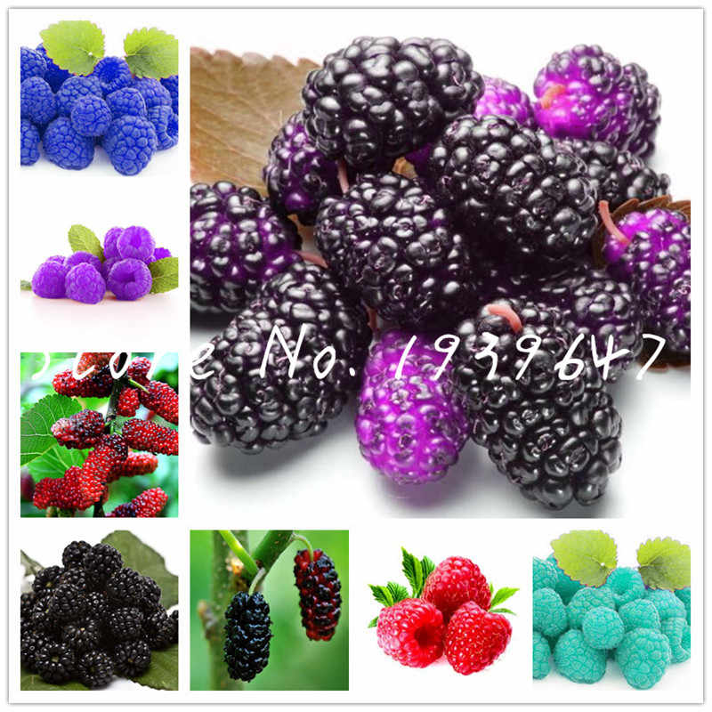 100Pcs Raspberry bonsai Organic Heirloom Fruit Bonsai Tree Plants Sweet And Fresh Plant For Home Garden Pots Plants Easy To Grow