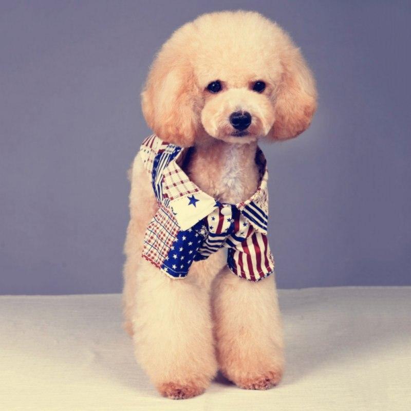 Kleine Hund Welpen Flagge Muster T shirt mit Revers Kragen Frühling ...