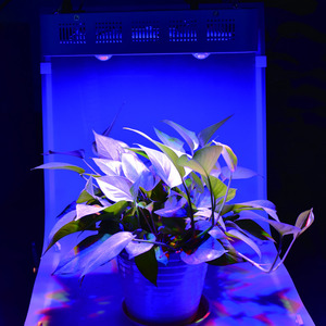Image 5 - כפול מתג Dimmable שמש השני 2000W COB וכפול שבבי LED לגדול אור ספקטרום מלא 410 730nm לצמחים מקורה ופרח