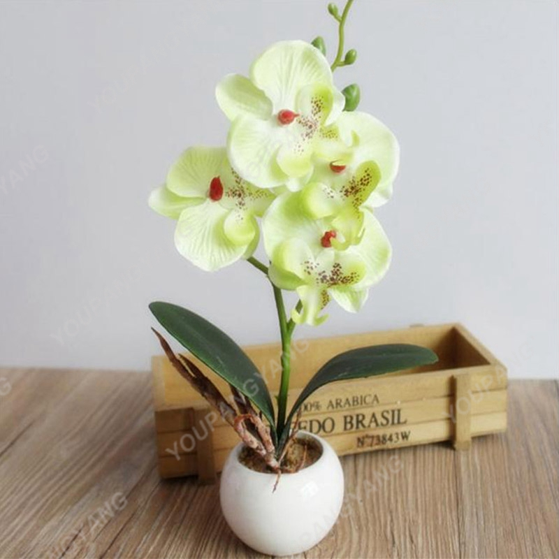 50PCS orchid-plant Bonsai Flower bonsai for home garden Phalaenopsis orchid bonsai Flowering Plants Potted for home garden