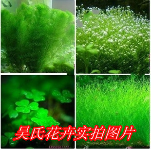 Buy mixed 200seeds bag water grass lawn for Aquarium decoration sealant