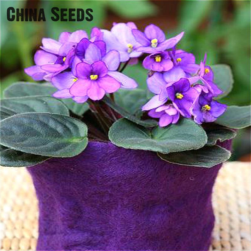 100 Pcs A Bag Violet Seeds Garden Plants Flower Seeds Potted Bonsai Perennial Herb Matthiola Incana Flower Pot Seed * Sementes