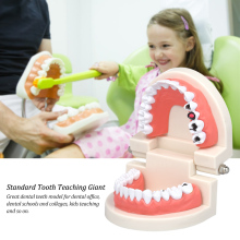 Standard Tooth Teaching Giant Dental Dentist Teeth Model Child Kidtraining Model Disease Teeth Medical Model dental removable dental model dental tooth arrangement practice model with screw teaching simulation model oral materials