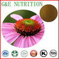 GMP: Immunnity chicoric acid echinacea Purpurea extract    10:1 100g