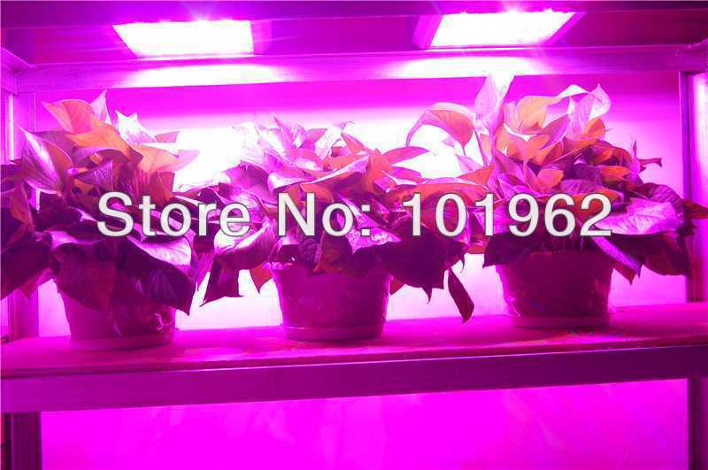 Wholesale 3pcs 300W LED indoor growing lights for plant