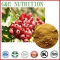 high quality Hawthorn  Extracts powder  10:1  100g
