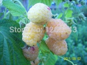 100 СЕМЕНА-100% натуральная дикий белая Малина Семена (R1005)-бонсай фрукты цветочных растений Семена