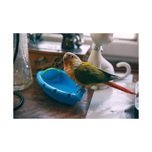 CAITEC Bird Toys Parrot Bathtub with Mirror