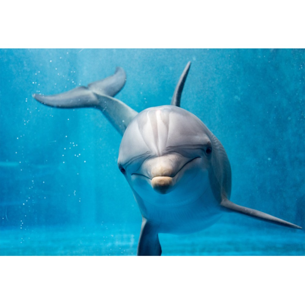 Laeacco Shark Backdrop Birthday Party Fish Sea Underwater World Party Poster Portrait Photo Backgrounds Photography Photo Studio