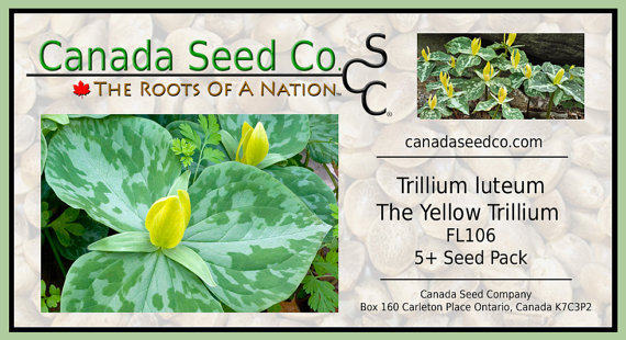 Online shop rare yellow trillium seeds packet trillium luteum fresh rare yellow trillium seeds packet trillium luteum fresh seeds scented yellow flower trillium seeds mightylinksfo