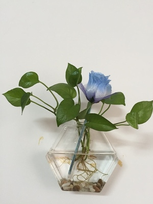 Floating wall terrarium,cool hexagon DIY wall glass vase recyclable ...